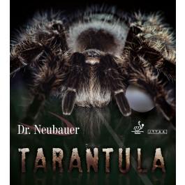 Dr.Neubauer Tarantula